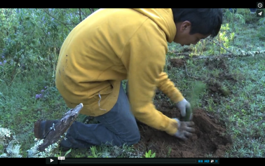 AJE: Mexican residents take on gangs to save trees