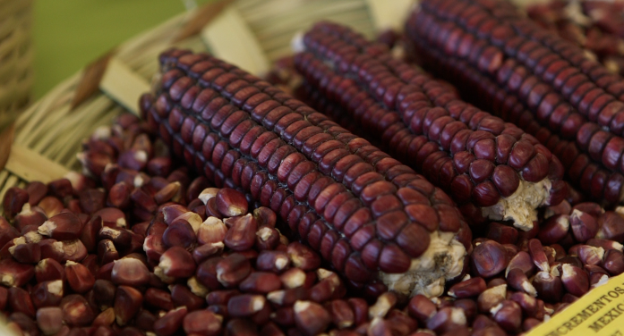 FT: Mexico's treasured crop under threat